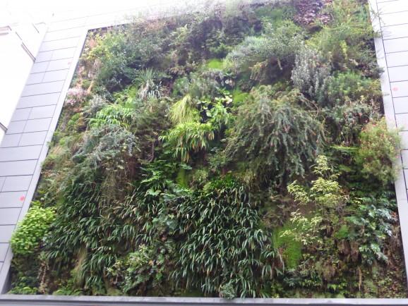 BHV Homme, Paris : Jardin de Patrick Blanc