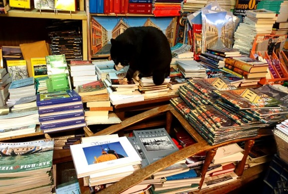 Buchhandlung Venedig
