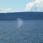 """Blauwal bei elf Uhr!"": Whale Watching in Kanada"