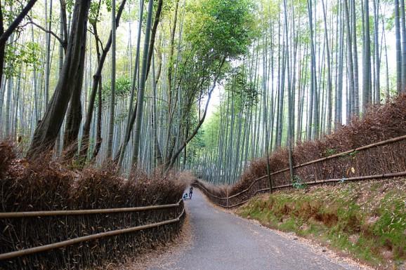 Bambushain Arashiyama