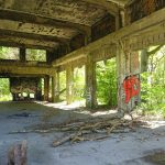 Mikroabenteuer in Hamburg: Der Ruinenwald in den Besenhorster Sandbergen