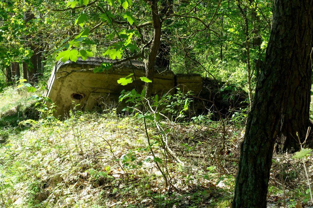 Besenhorster Ruinenwald