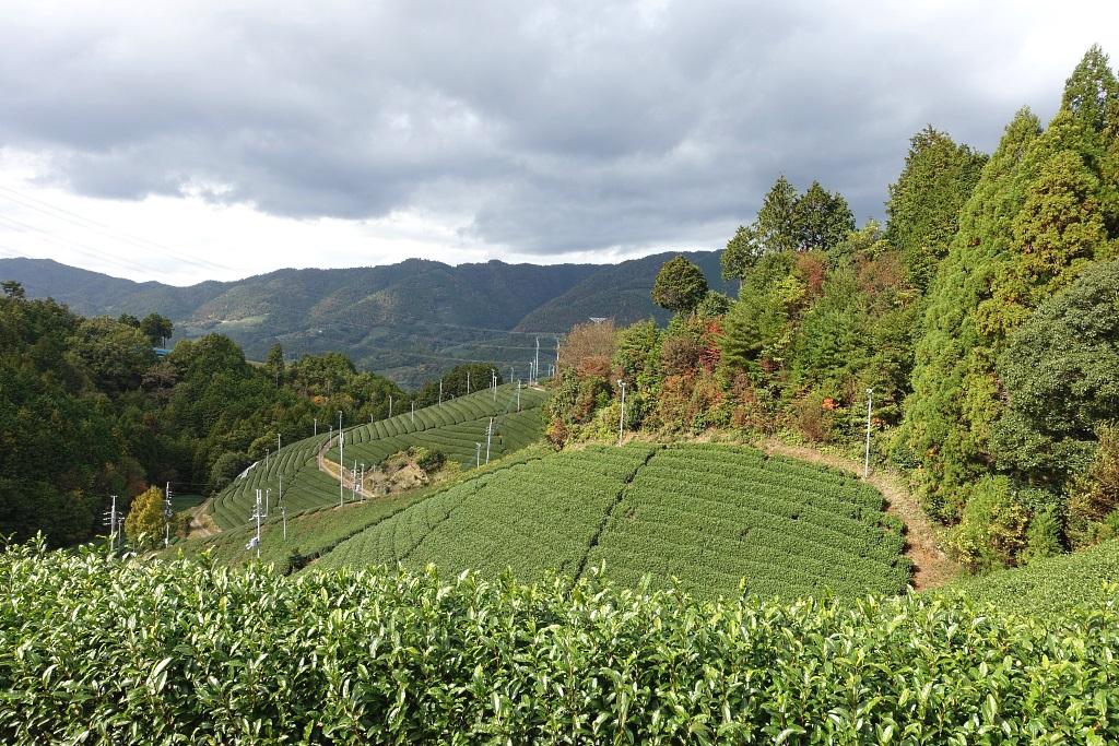 Wazuka, Kyoto