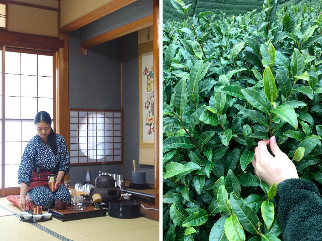 Tee-Tourismus in Japan