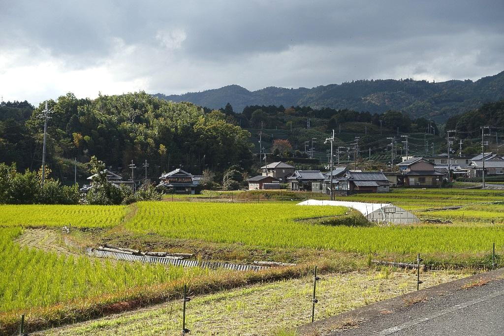 Wazuka tea village