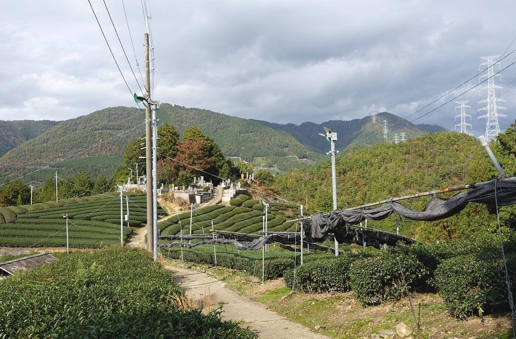 Reisetipp Japan: Tee-Tour in Wazuka
