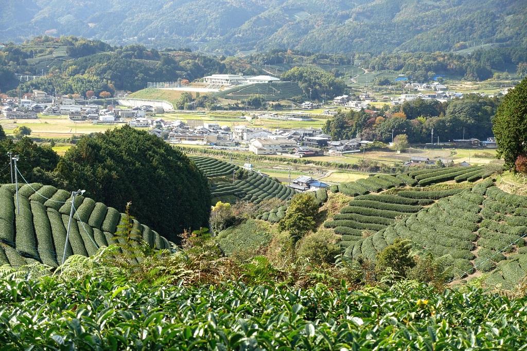 Teeplantage in Japan: Wazuka